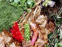 Image representing Views wanted on garden waste collection service